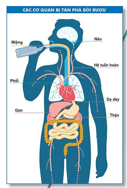 Tác hại tàn phá cơ thể của rượu bia